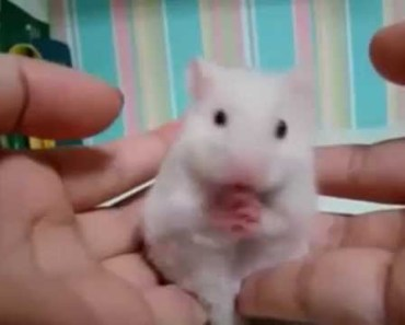 One funny hamster - one funny hamster