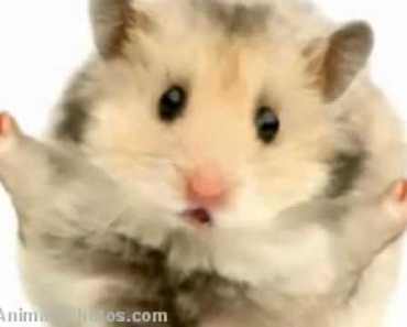 the Hamster time song realy funny must see!!! - the hamster time song realy funny must see