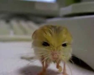 Wet and Funny Cute Hamster - wet and funny cute hamster