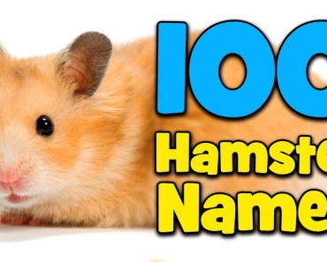 100 Hamster Name Ideas! - 100 hamster name ideas