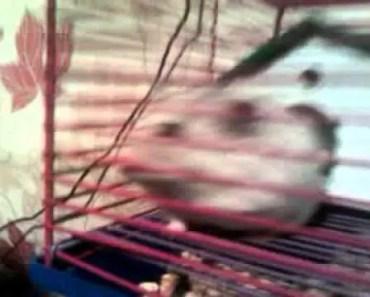 Funny hamster - 1507316419 funny hamster