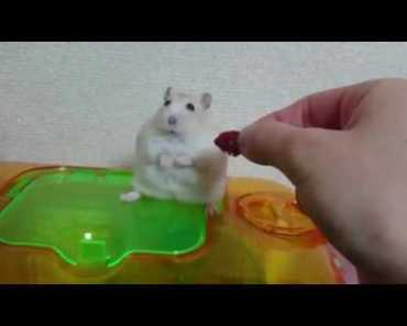 Hamster.exe has Stopped Working - 1507378290 hamster exe has stopped working