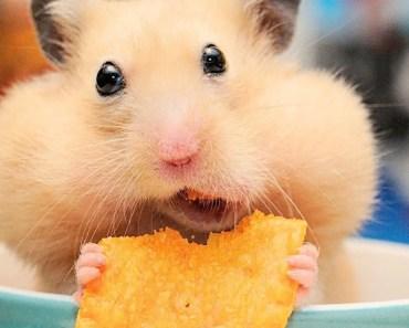 Funny Hamster Compilation - 1508519196 funny hamster compilation