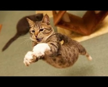 Cats Jumping Most Funny Jumping Cats Fail - Funny Cats Jumping and Missing Video Compilation - 1508972492 cats jumping most funny jumping cats fail funny cats jumping and missing video compilation