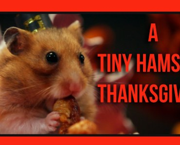 A Tiny Hamster Thanksgiving (Ep. 4) - a tiny hamster thanksgiving ep 4