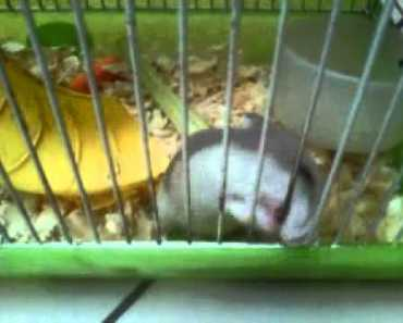 angry hamster and very funny - angry hamster and very funny