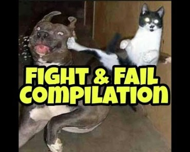 Animals funny fight & fail competition 2017 - animals funny fight fail competition 2017