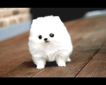 Best Funny Puppies And Cute Puppy Videos Compilation 2017 - best funny puppies and cute puppy videos compilation 2017