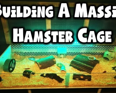 Building A MASSIVE Hamster Cage | IKEA Billy Hamster Cage - building a massive hamster cage ikea billy hamster cage