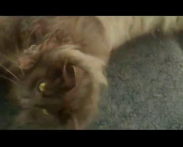 Cats Jumping Most Funny Jumping Cats Fail - Funny Cats Jumping and Missing Vi Compilation Epic Tube - cats jumping most funny jumping cats fail funny cats jumping and missing vi compilation epic tube