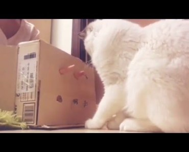 Cute cat, teasing it to play, playing hamster games, funny videos - cute cat teasing it to play playing hamster games funny videos