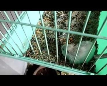 Disturbing a Hamster when Slepp, So Funny - disturbing a hamster when slepp so funny