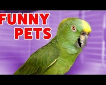 Funniest Pets & Animals Home Video Bloopers of 2016 | Weekly Compilation - funniest pets animals home video bloopers of 2016 weekly compilation