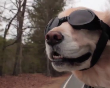 Funny animals pigs, dogs, horses, hamsters, cats - funny animals pigs dogs horses hamsters cats