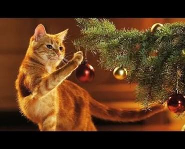 Funny Cats vs Christmas Tree Videos Compilation 2017 [CUTE] - funny cats vs christmas tree videos compilation 2017 cute