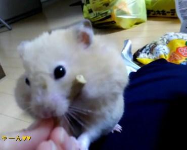 Funny Hamster 1 - funny hamster 1