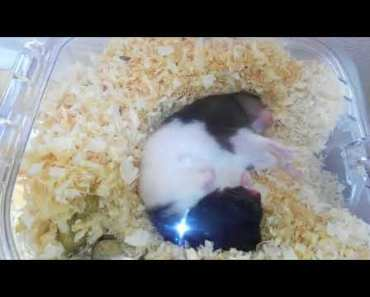 Funny hamster 5 - funny hamster 5