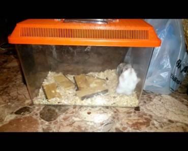 Funny hamster making back-flips!!!! - funny hamster making back flips
