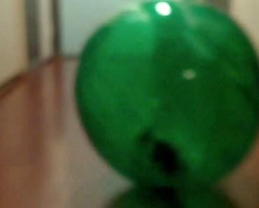 "FUNNY HAMSTER! new 12"" chinchilla ball, MEET LAYLA! - funny hamster new 12 chinchilla ball meet layla"