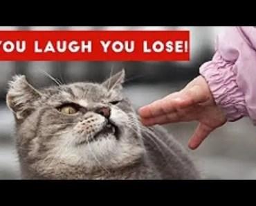 FUNNY HAMSTER VIDEOS FAILS - funny hamster videos fails