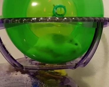 Funny Hamsters running Wheel Fail! (OMG) - funny hamsters running wheel fail omg
