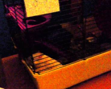 Funny moments with my hamster Henry - funny moments with my hamster henry
