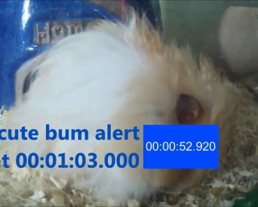 funny pet hamster timer to cute bum alert, short film! happy kids all! - funny pet hamster timer to cute bum alert short film happy kids all