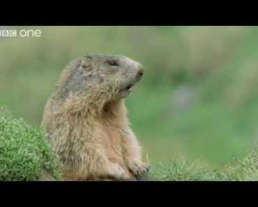 Funny Talking Animals - Walk On The Wild Side Preview - BBC One - funny talking animals walk on the wild side preview bbc one
