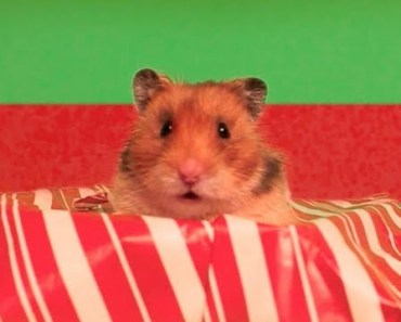 Hammy's Nutty Christmas - Holiday Songs - The Talking Hamster - hammys nutty christmas holiday songs the talking hamster