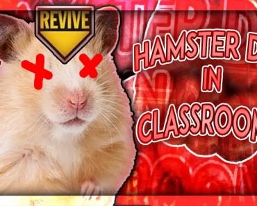 HAMSTER DIES IN CLASSROOM!? (LIFE STORY) - hamster dies in classroom life story