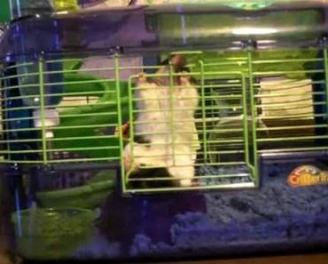 Hamster Escape Critter Trail Cage - hamster escape critter trail cage