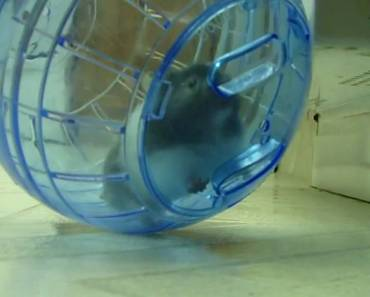 Hamster in a Ball - hamster in a ball