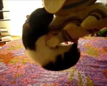 Hamster ninja (funny hamster Idi hanging under plush toy) - hamster ninja funny hamster idi hanging under plush toy