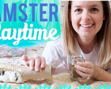 Hamster Playtime & Treats | Relaxing with Moo & Update - hamster playtime treats relaxing with moo update