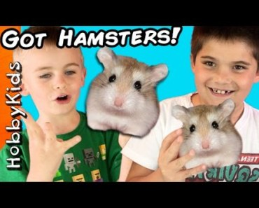 HobbyKids Buy REAL Hamsters! Escaped Pets at Home + Petco Toy Shopping Haul HobbyKidsTV - hobbykids buy real hamsters escaped pets at home petco toy shopping haul hobbykidstv