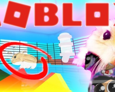 HOW TO BE A HAMSTER IN ROBLOX! FUNNY SIMULATOR Family Friendly Lets Play Gameplay Fun Kids Roleplay - how to be a hamster in roblox funny simulator family friendly lets play gameplay fun kids roleplay