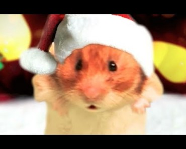 'Joy to the World' - 'Joy to My Nuts' Hamster Music Video - The Talking Hamster - joy to the world joy to my nuts hamster music video the talking hamster