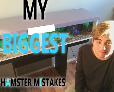 My BIGGEST Hamster Mistakes - my biggest hamster mistakes