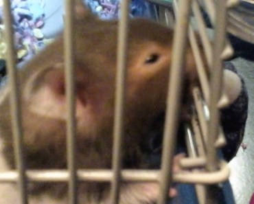 My hamster doing funny things part 2 - my hamster doing funny things part 2