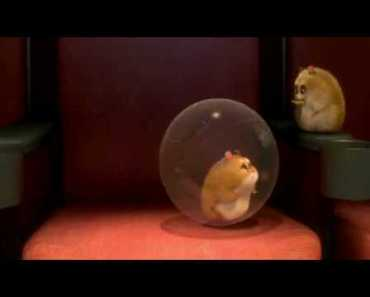 Rhino (Bolt Hamster) on High School Musical - rhino bolt hamster on high school musical