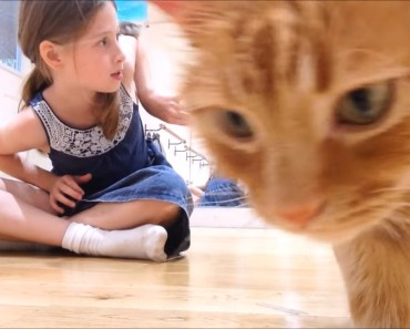 Small pets for KIDS, MY cat, and Russian dwarf hamster. (Handling) - small pets for kids my cat and russian dwarf hamster handling