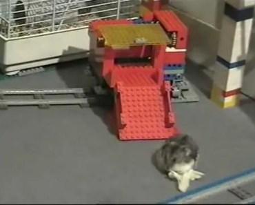 Smart hamster takes Lego Train Express! - smart hamster takes lego train