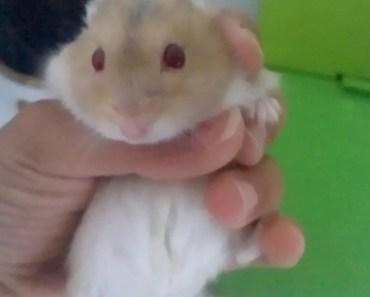 SUPER FUNNY Hamster Video - super funny hamster video