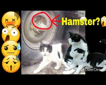 This hamster are genius new thuglife video 2017 - this hamster are genius new thuglife video 2017