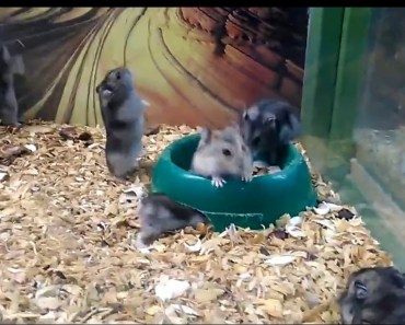 This Hamster is Broken - this hamster is broken