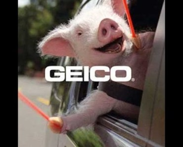 Top 13 The Best and Funny Geico Maxwell the Pig Insurance TV Commercials - top 13 the best and funny geico maxwell the pig insurance tv commercials