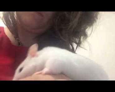 Why is my hamster making this noise? - why is my hamster making this noise