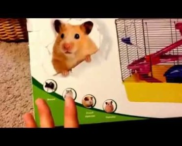 Why Pet Store Hamster Cages Aren't Good - why pet store hamster cages arent good