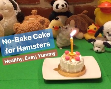 [wukong_qq] DIY No-bake Cake for Hamsters! - wukong qq diy no bake cake for hamsters