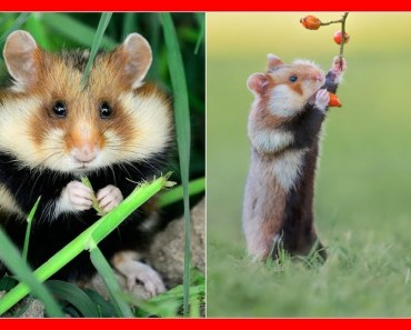 Having A Bad Day Here's 48 Wild Hamsters - 1510149539 having a bad day heres 48 wild hamsters